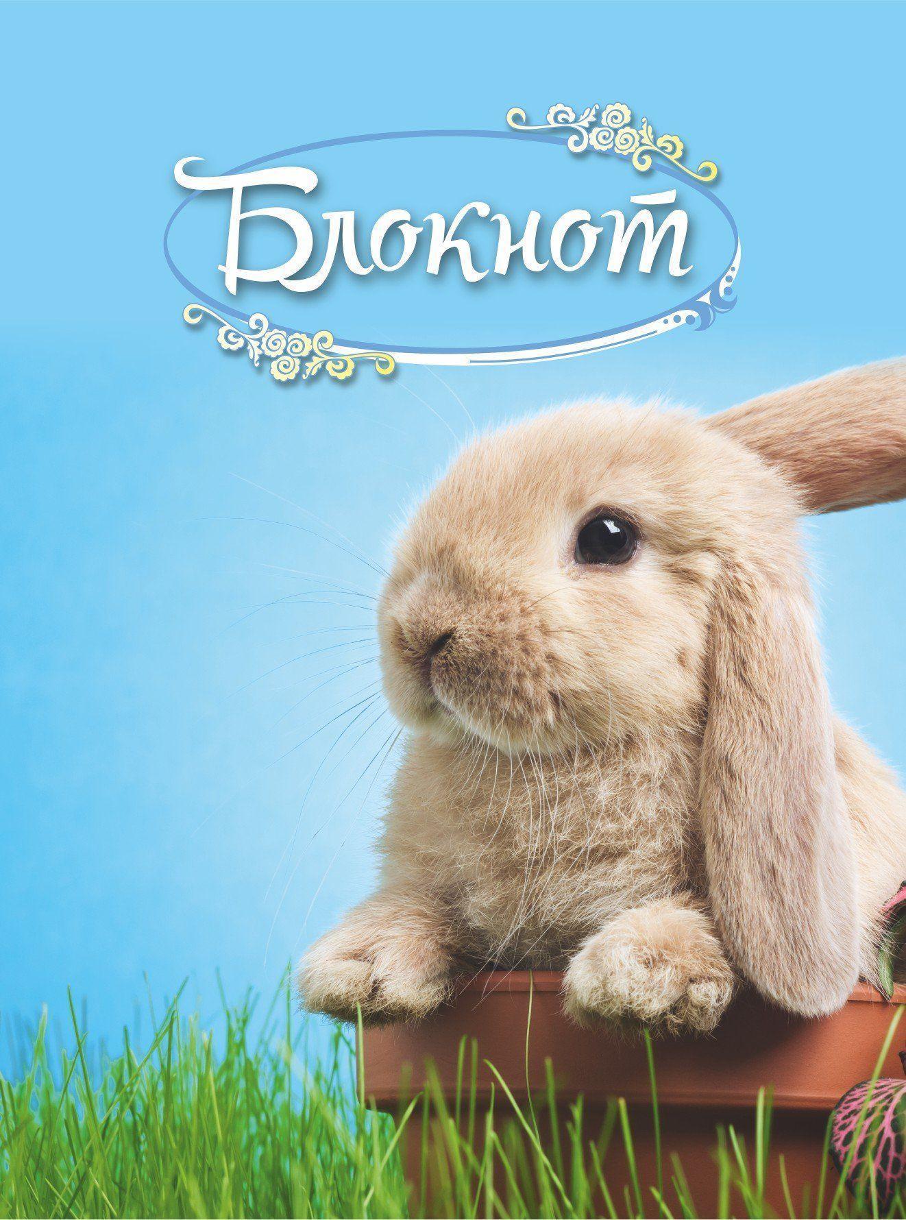 Картинка с днем рождения с кроликами