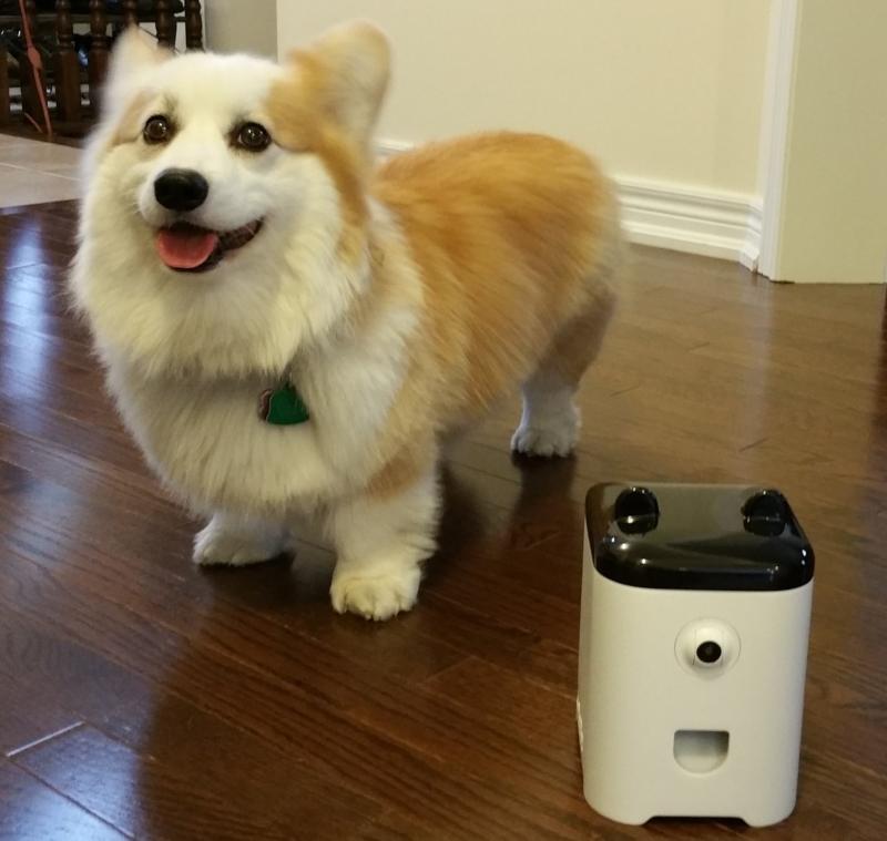 Лучшая радионяня для собак