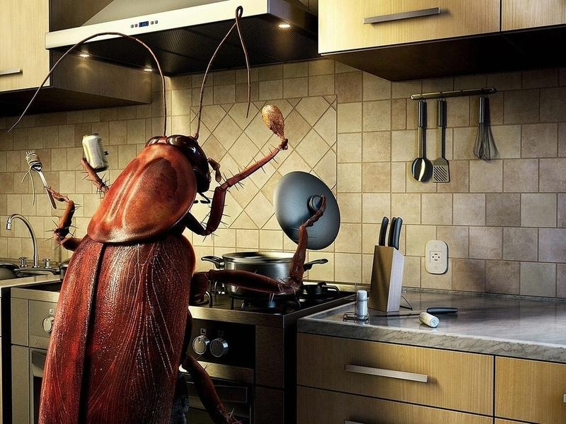 6 лучших средств от тараканов