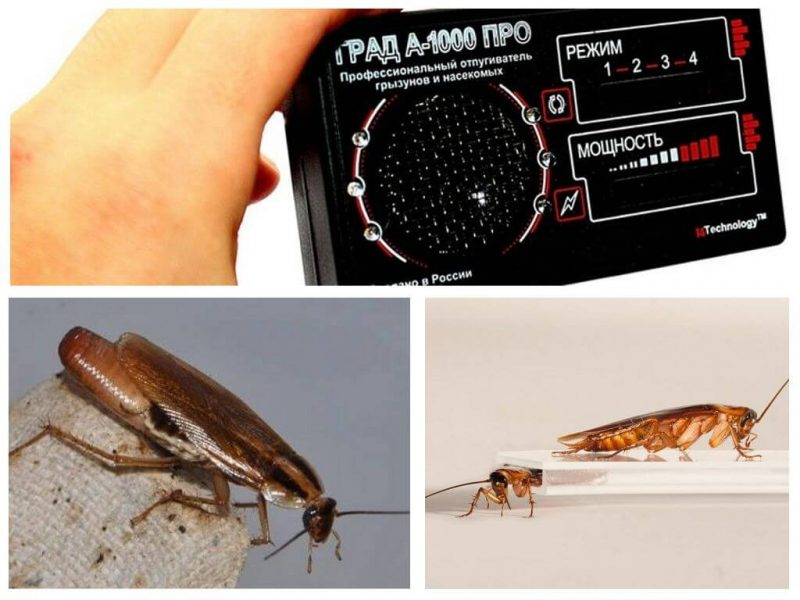 Китайская отрава от тараканов: обзор средств